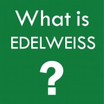 what is edelweiss